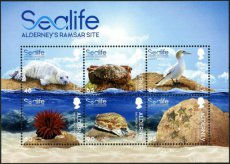 ALDERNEY 2020 Sealife Birds Marine fauna